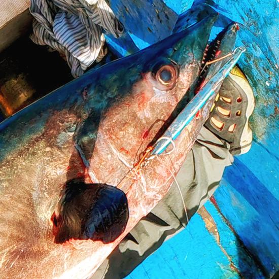 Jigging cá Thu Ngàng 87kg ở Phú Yên